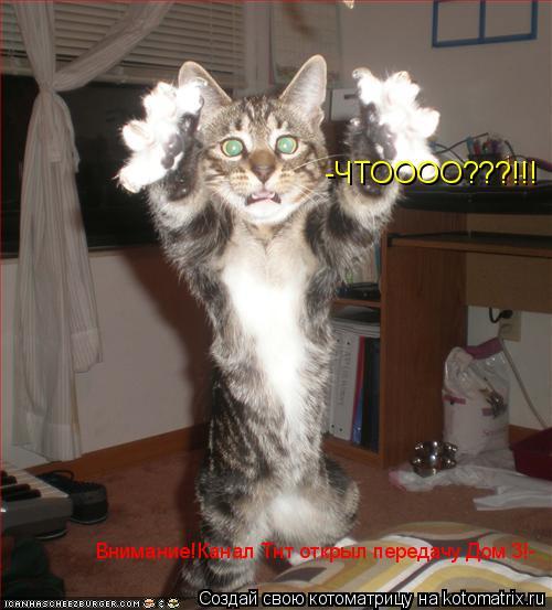 Котоматрица: Внимание!Канал Тнт открыл передачу Дом 3!- -ЧТОООО???!!!