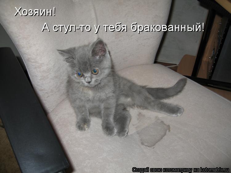 Котоматрица: Хозяин!  А стул-то у тебя бракованный!