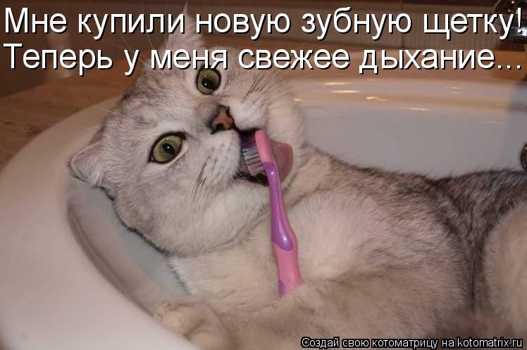 Котоматрица: Мне купили новую зубную щетку! Теперь у меня свежее дыхание...