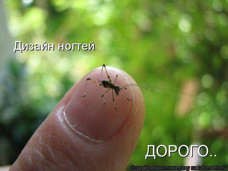 Котоматрица: Дизайн ногтей ДОРОГО..