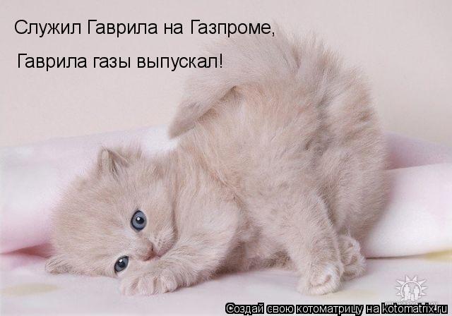 Котоматрица: Служил Гаврила на Газпроме, Гаврила газы выпускал!