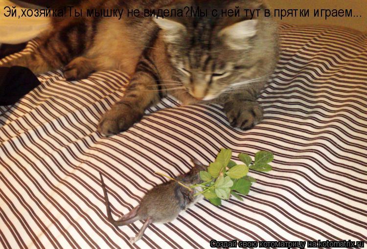 Котоматрица: Эй,хозяйка!Ты мышку не видела?Мы с ней тут в прятки играем...