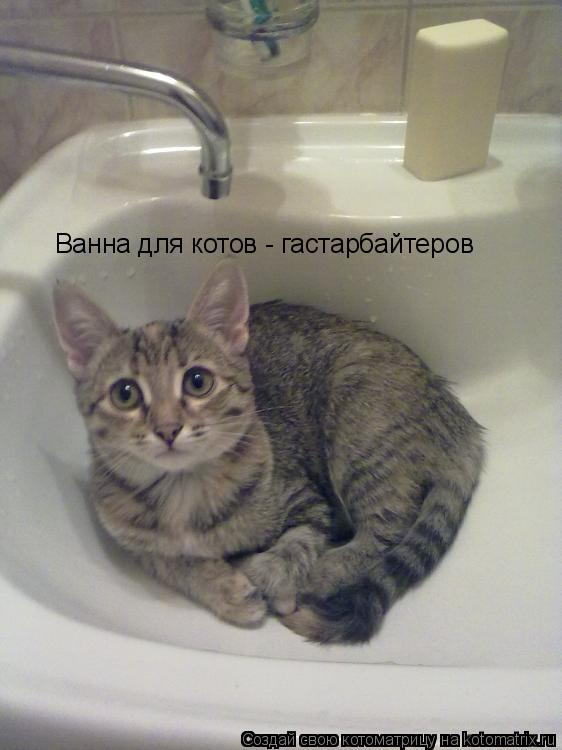 Котоматрица: Ванна для котов - гастарбайтеров