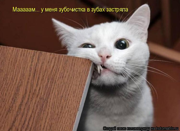 Котоматрица: Мааааам... у меня зубочистка в зубах застряла