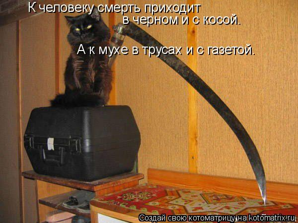 Котоматрица: К человеку смерть приходит в черном и с косой. А к мухе в трусах и с газетой.