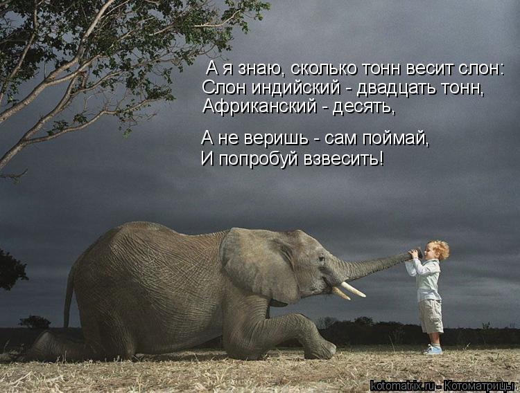 Котоматрица: А я знаю, сколько тонн весит слон: Слон индийский - двадцать тонн, Африканский - десять, А не веришь - сам поймай, И попробуй взвесить!