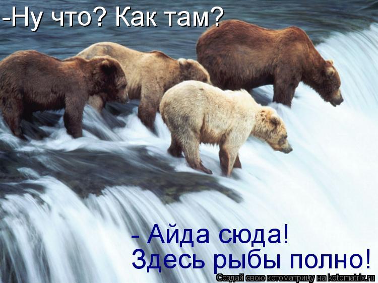 Котоматрица: Здесь рыбы полно! - Айда сюда!  -Ну что? Как там?
