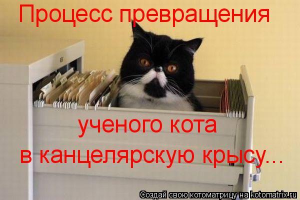 Котоматрица: Процесс превращения ученого кота  в канцелярскую крысу...