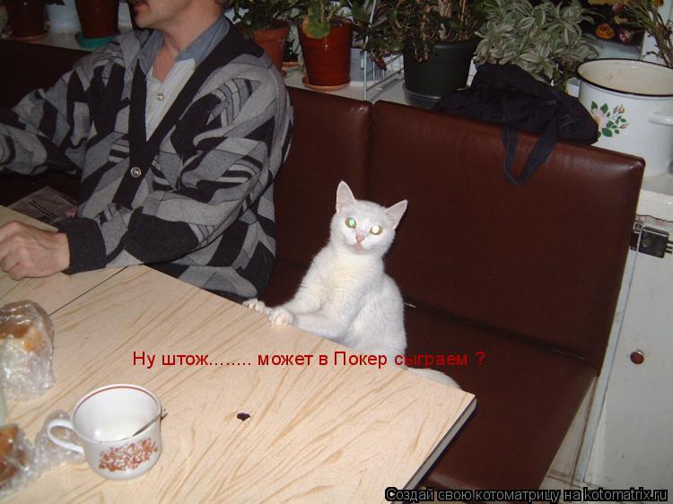 Котоматрица: Ну штож........ может в Покер сыграем ?
