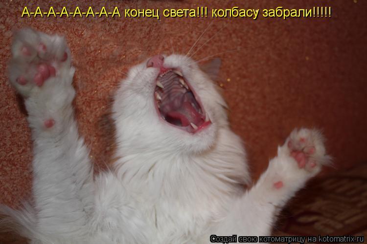 Котоматрица: А-А-А-А-А-А-А-А конец света!!! колбасу забрали!!!!! А-А-А-А-А-А-А-А конец света!!! колбасу забрали!!!!!