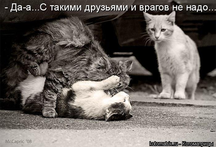 Котоматрица: - Да-а...С такими друзьями и врагов не надо...