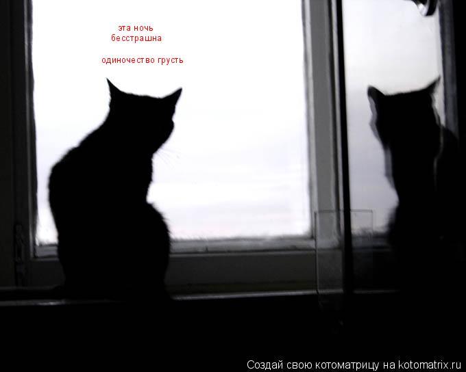 Котоматрица: эта ночь бесстрашна одиночество грусть