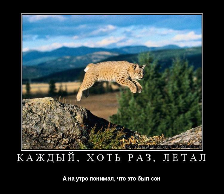 Котоматрица: Каждый, хоть раз, летал А на утро понимал, что это был сон