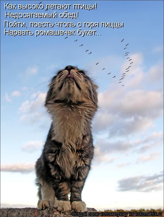 Котоматрица: Как высоко летают птицы! Пойти, поесть чтоль с горя пиццы Недосягаемый обед! Нарвать ромашечек букет...
