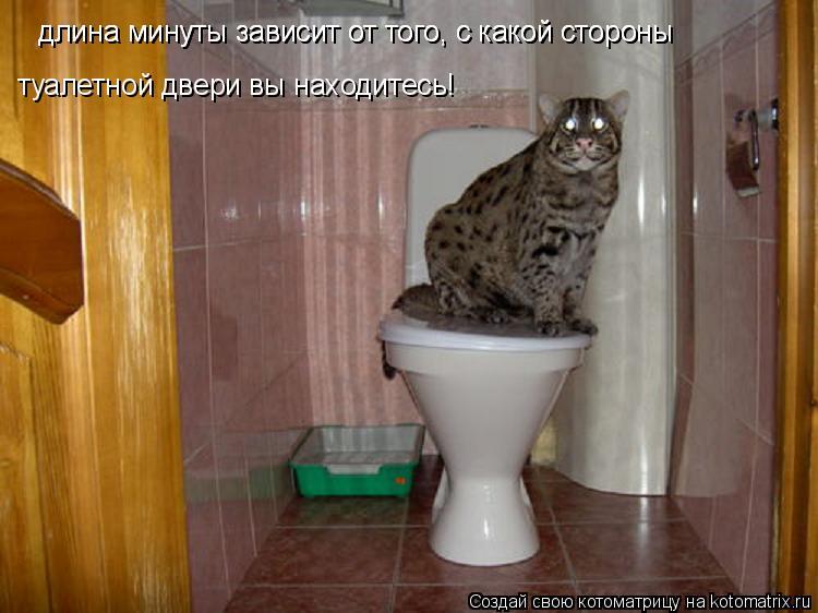 Котоматрица: длина минуты зависит от того, с какой стороны длина минуты зависит от того, с какой стороны туалетной двери вы находитесь!