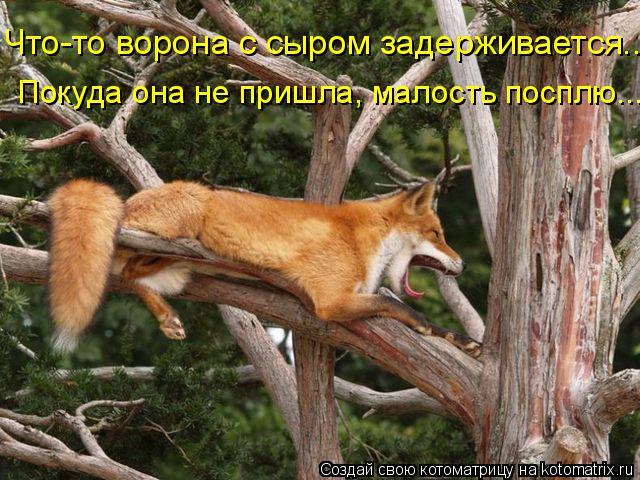 Котоматрица: Что-то ворона с сыром задерживается... Покуда она не пришла, малость посплю...