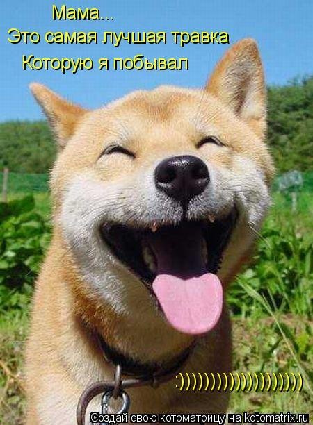 Котоматрица: Мама... Это самая лучшая травка Которую я побывал :))))))))))))))))))))