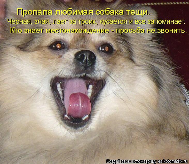 Котоматрица: Пропала любимая собака тещи.  Черная, злая, лает за троих, кусается и все запоминает.  Кто знает местонахождение - просьба не звонить.