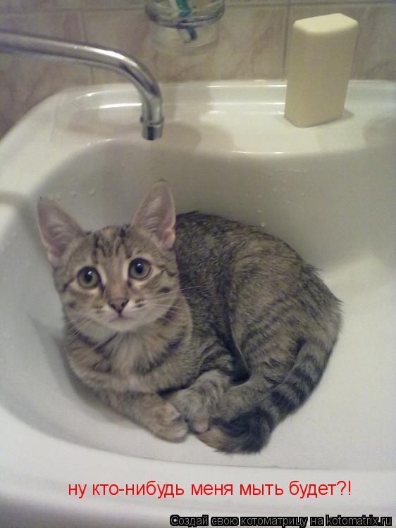 Котоматрица: ну кто-нибудь меня мыть будет?!