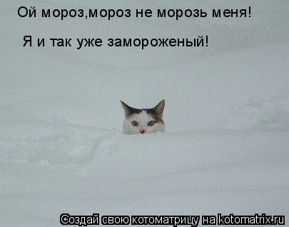 Котоматрица: Ой мороз,мороз не морозь меня! Я и так уже замороженый!