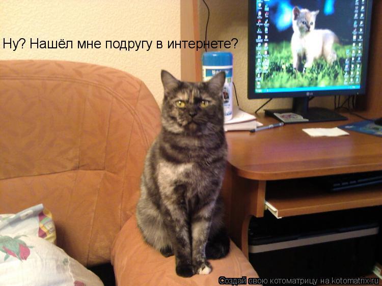 Котоматрица: Ну? Нашёл мне подругу в интернете?