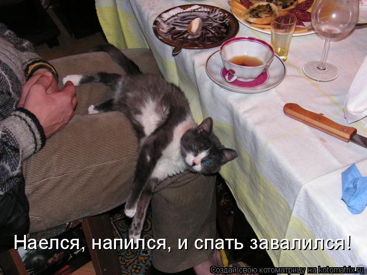 Котоматрица: Наелся, напился, и спать завалился!