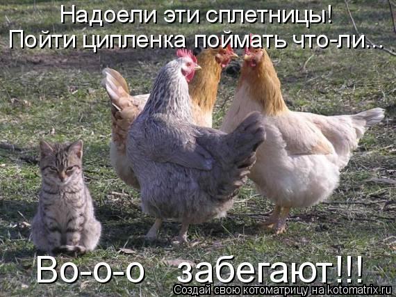 Котоматрица: Надоели эти сплетницы!   Пойти ципленка поймать что-ли...  Во-о-о   забегают!!!
