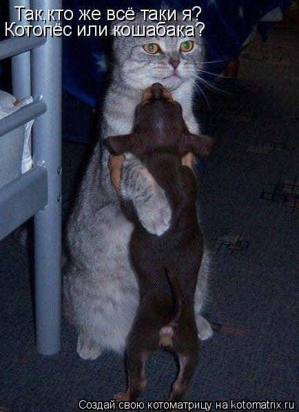 Котоматрица: Так,кто же всё таки я? Котопёс или кошабака?