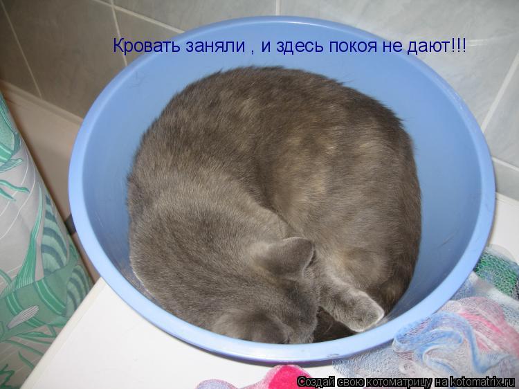 Котоматрица: Кровать заняли , и здесь покоя не дают!!!