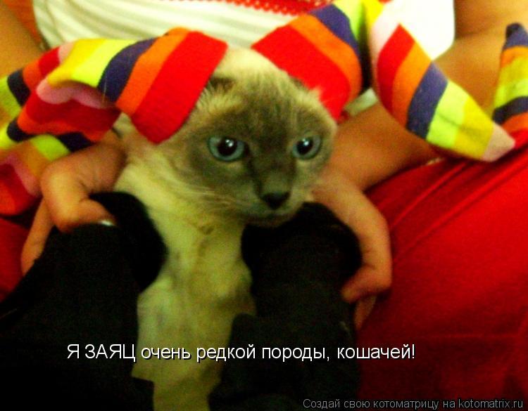 Котоматрица: Я ЗАЯЦ очень редкой породы, кошачей!
