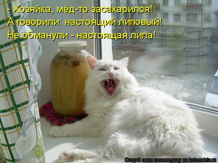 Котоматрица: - Хозяйка, мёд-то засахарился!  А говорили: настоящий липовый!  Не обманули - настоящая липа!