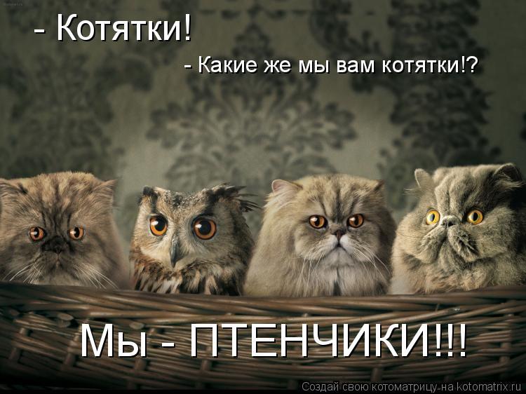 Котоматрица: - Котятки! - Какие же мы вам котятки!?  Мы - ПТЕНЧИКИ!!!
