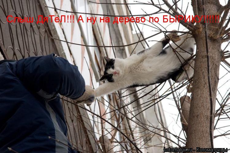Котоматрица: Слыш ДяТеЛ!!! А ну на дерево по БЫРИКУ!!!!!!