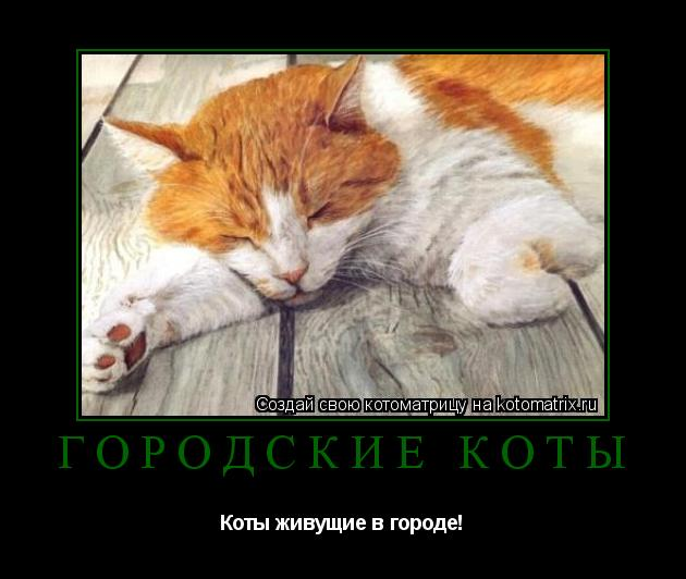 Котоматрица: Городские коты Коты живущие в городе!