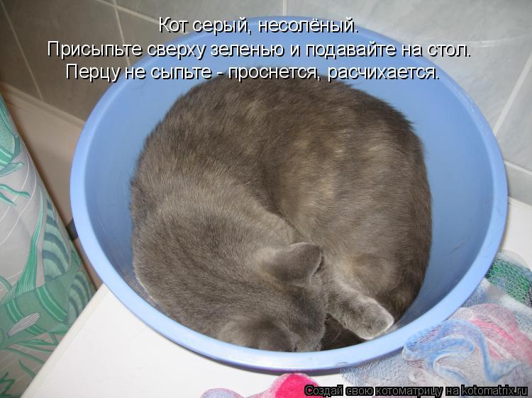 Котоматрица: Присыпьте сверху зеленью и подавайте на стол. Кот серый, несолёный. Перцу не сыпьте - проснется, расчихается.