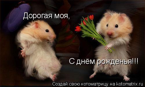 Котоматрица: Дорогая моя, С днём рожденья!!!