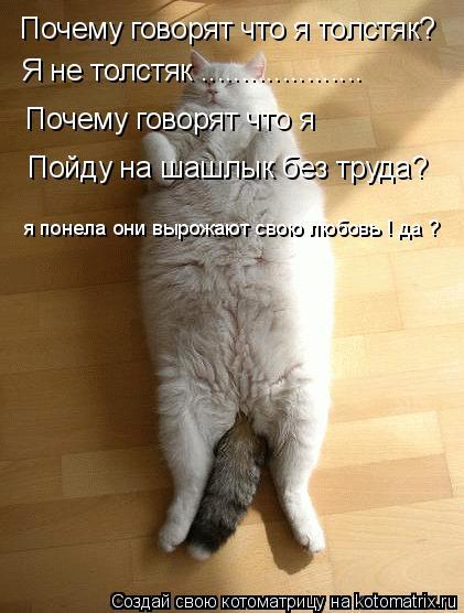 Котоматрица: Почему говорят что я толстяк? Я не толстяк .................... Почему говорят что я   Пойду на шашлык без труда? я понела они вырожают свою любовь !
