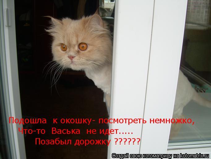 Котоматрица: Подошла  к окошку- посмотреть немножко, Что-то  Васька  не идет..... Позабыл дорожку ??????