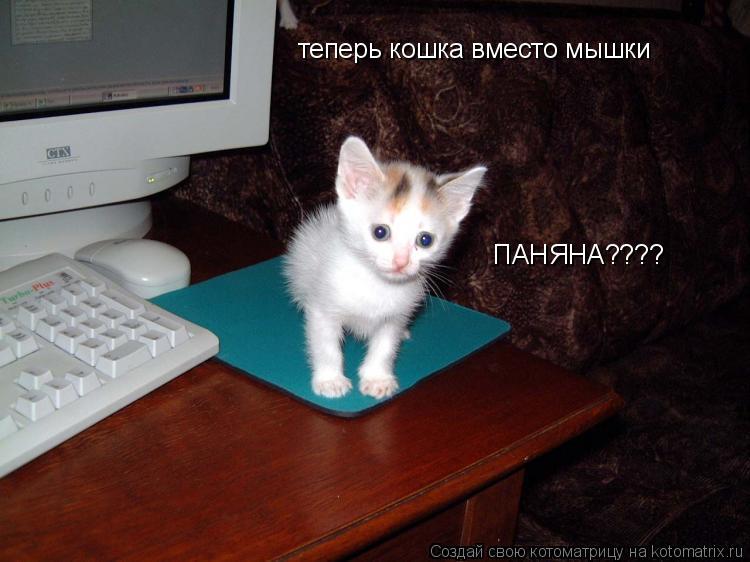Котоматрица: теперь кошка вместо мышки ПАНЯНА????