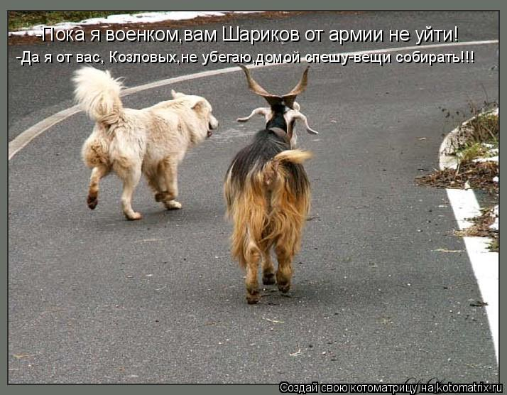 Котоматрица: -Пока я военком,вам Шариков от армии не уйти! -Да я от вас, Козловых,не убегаю,домой спешу-вещи собирать!!!