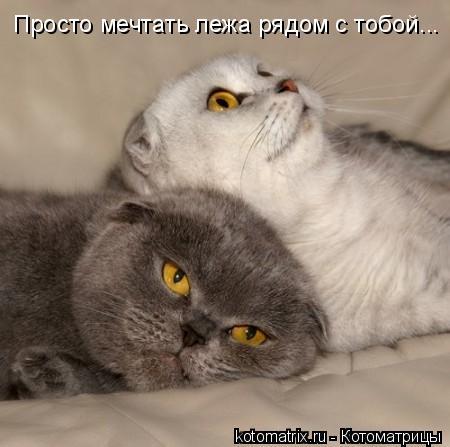 Котоматрица: Просто мечтать лежа рядом с тобой...