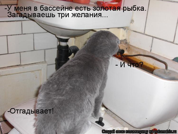 Котоматрица: -У меня в бассейне есть золотая рыбка.  Загадываешь три желания... - И что? -Отгадывает!