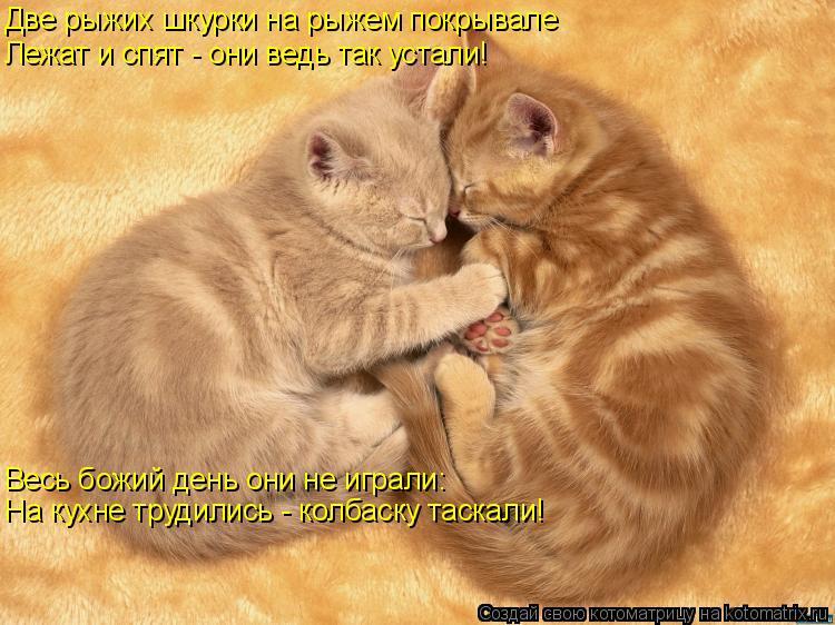 Котоматрица: Две рыжих шкурки на рыжем покрывале Лежат и спят - они ведь так устали! Весь божий день они не играли: На кухне трудились - колбаску таскали!