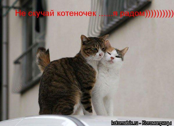 Котоматрица: Не скучай котеночек ......я радом))))))))))