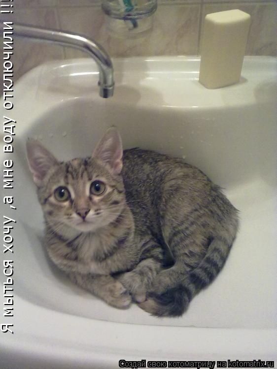 Котоматрица: Я мыться хочу ,а мне воду отключили !!!