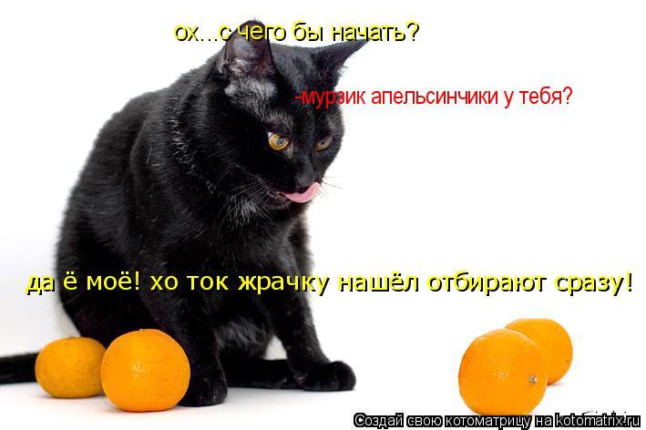 Котоматрица: ох...с чего бы начать? -мурзик апельсинчики у тебя? да ё моё! хо ток жрачку нашёл отбирают сразу!