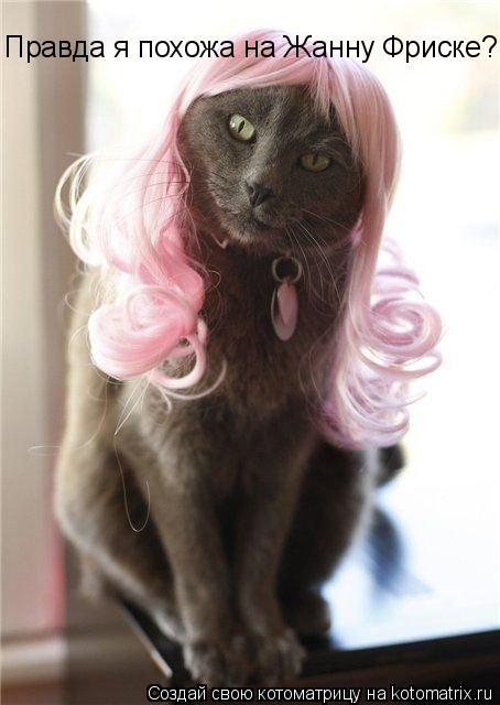 Котоматрица: Правда я похожа на Жанну Фриске?