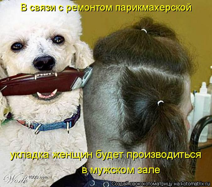 Котоматрица: В связи с ремонтом парикмахерской  укладка женщин будет производиться  в мужском зале