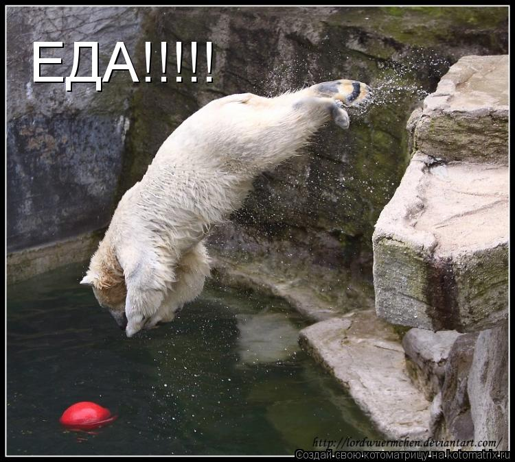 Котоматрица: ЕДА!!!!!