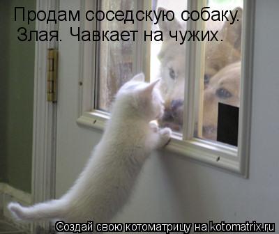 Котоматрица: Продам соседскую собаку.  Злая. Чавкает на чужих.